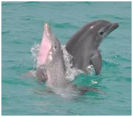 DolphinSELKE-TwoHotPlay