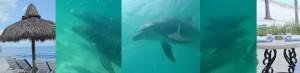 DolphinHeaderUmbrella